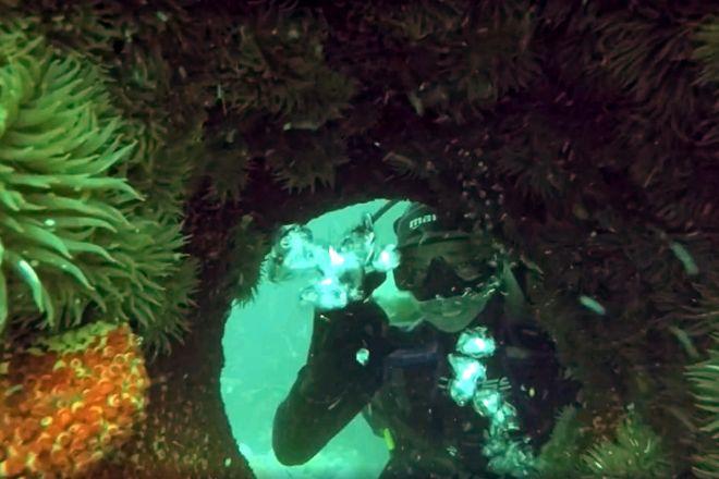 Mayan Dive Center, Playa del Carmen, Mexico