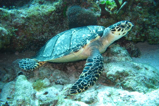 Nautilus Diving & Training Center, Cancun, Mexico