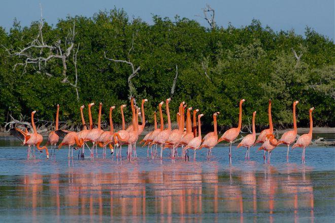 Parque Natural Ria Lagartos, Rio Lagartos, Mexico
