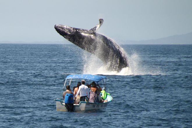 Red Dolphin Sailing Charters, La Cruz de Huanacaxtle, Mexico
