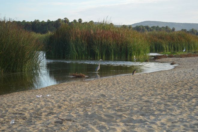 San Jose's Estuary and Bird Sanctuary, San Jose del Cabo, Mexico