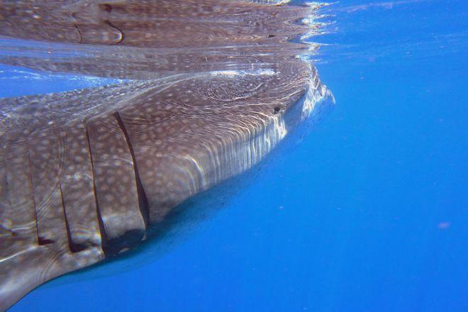 Sea Friends Tours, Cancun, Mexico