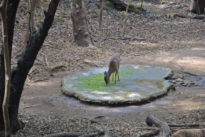 Zoologico Miguel Alvarez del Toro, Tuxtla Gutierrez, Mexico