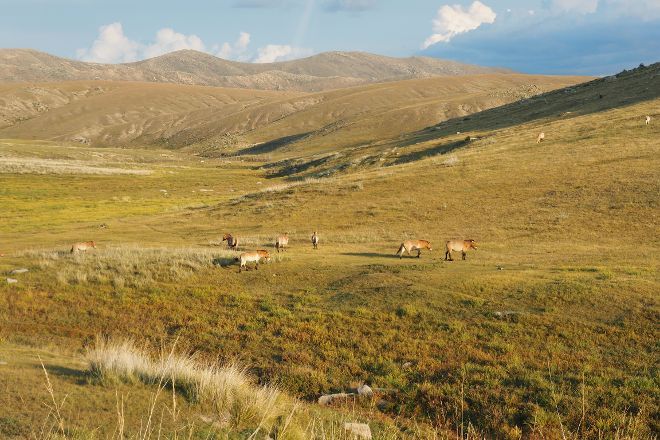Hustai National Park, Ulaanbaatar, Mongolia