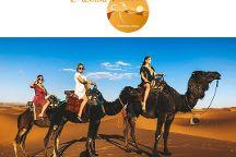 Camel Tour Sahara