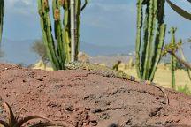 Crocoparc, Agadir, Morocco