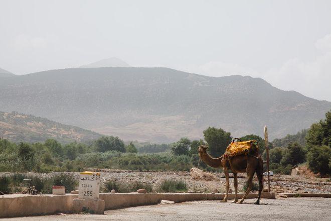 Amodou Cheval, Tamraght, Morocco