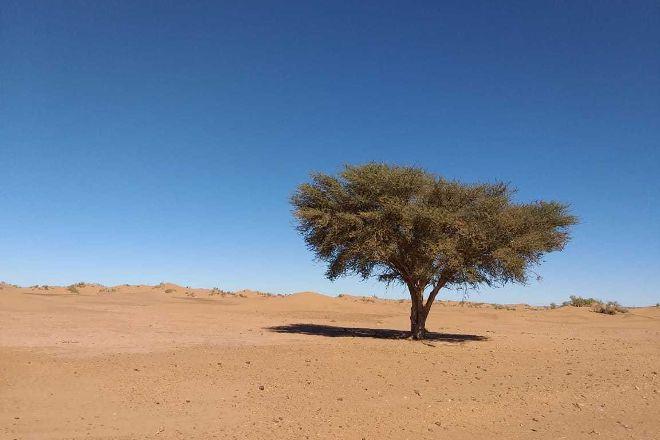 Desert Majesty, Ouarzazate, Morocco