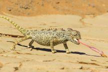 Tommy's Tours and Safaris, Swakopmund, Namibia