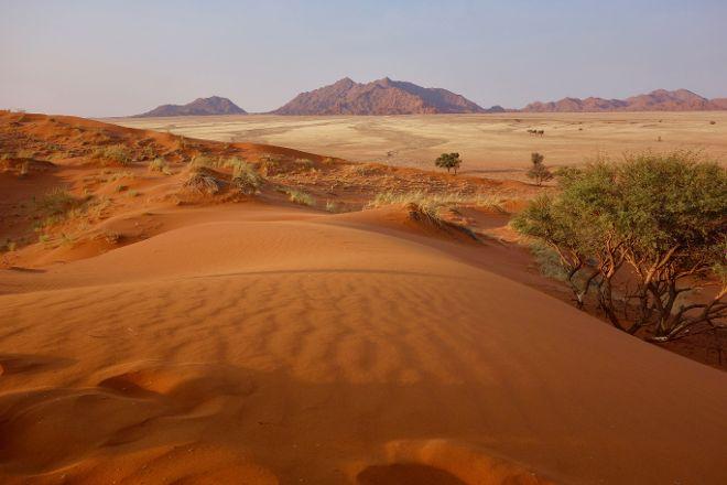 Elim Dunes, Namib-Naukluft Park, Namibia
