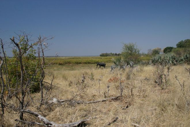 Mahango Game Reserve, Otjiwarongo, Namibia