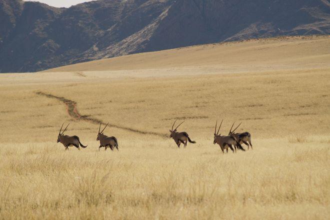NamibRand Nature Reserve, Windhoek, Namibia