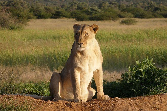 Okonjima Game Reserve, Waterberg Plateau Park, Namibia
