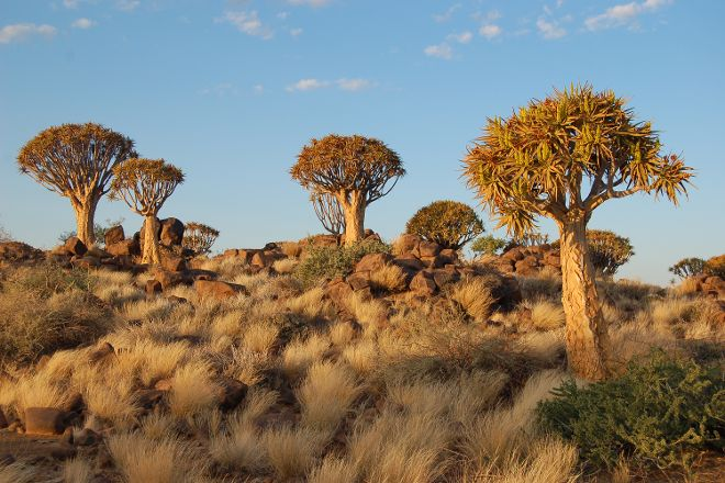 Quivertree Forest and Giant's Playground, Keetmanshoop, Namibia