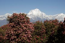 Nature Trail Travels & Tours, Trekking & Expeditions: Day Tours