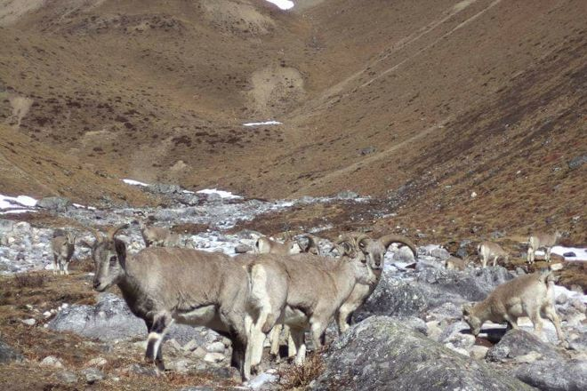 Great Vision Trek & Expedition - Day Tours, Kathmandu, Nepal
