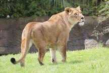 Auckland Zoo, Auckland, New Zealand