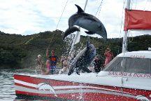 Carino Wildlife Cruises