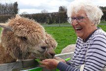 Cornerstone Alpaca Farm, Gordonton, New Zealand