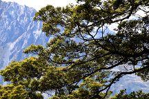 Governors Bush Walk, Mt. Cook Village, New Zealand