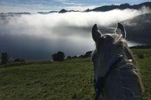 Horse Trekking Lake Okareka