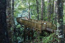 Parry Kauri Park, Warkworth, New Zealand