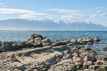 Peninsula Seal Colony, Kaikoura, New Zealand