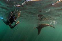 Seal Swim Kaikoura, Kaikoura, New Zealand