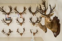 The World of Deer Museum & Speciality Shop, Wanaka, New Zealand