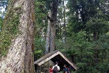 Whirinaki Rainforest Experiences - Day Tours