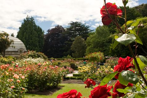 Christchurch Botanic Gardens, Christchurch, New Zealand