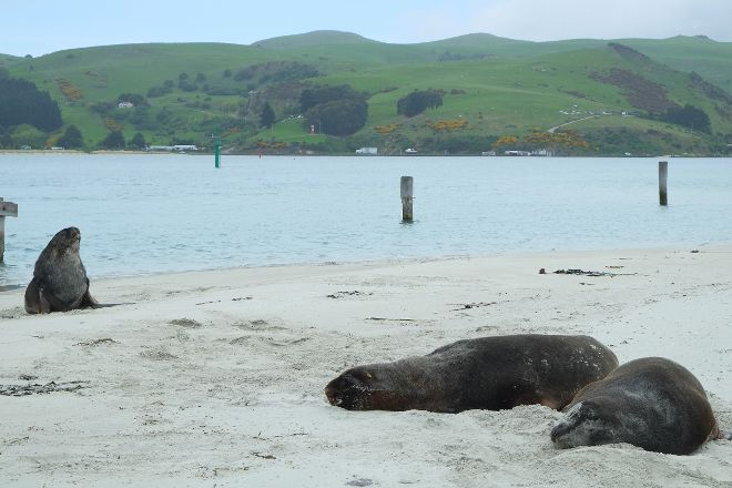 Aramoana Beach, Dunedin, New Zealand