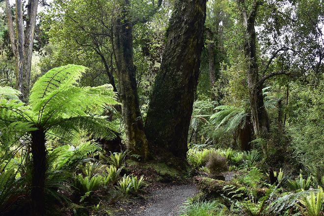 Beaks and Feathers, Stewart Island, New Zealand