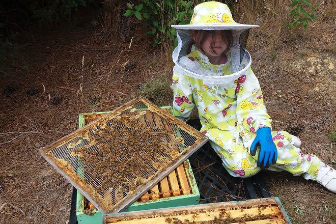 Bee Haven @ Paihia, Paihia, New Zealand