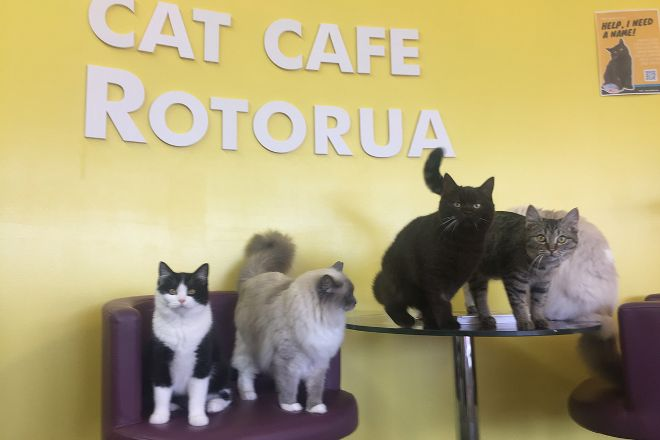 Fancy Meow Cat Cafe, Rotorua, New Zealand