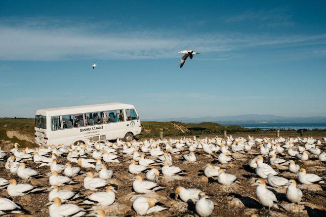 Gannet Safaris Overland, Te Awanga, New Zealand