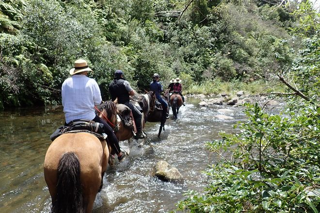 Horsemtrails, Tongariro National Park, New Zealand