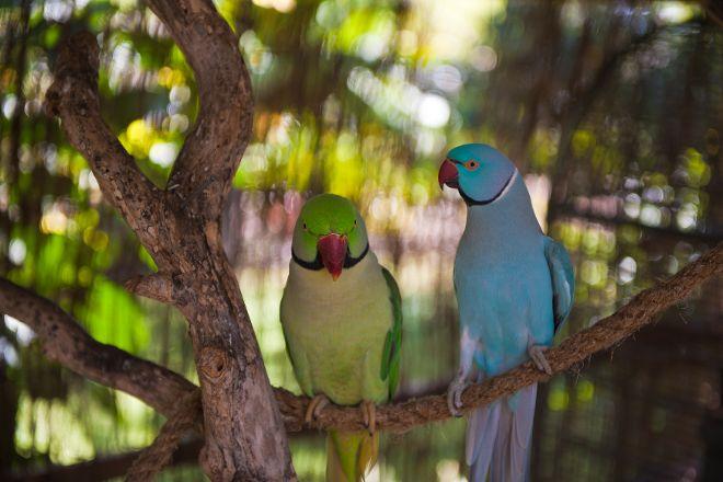 The Parrot Place, Kerikeri, New Zealand
