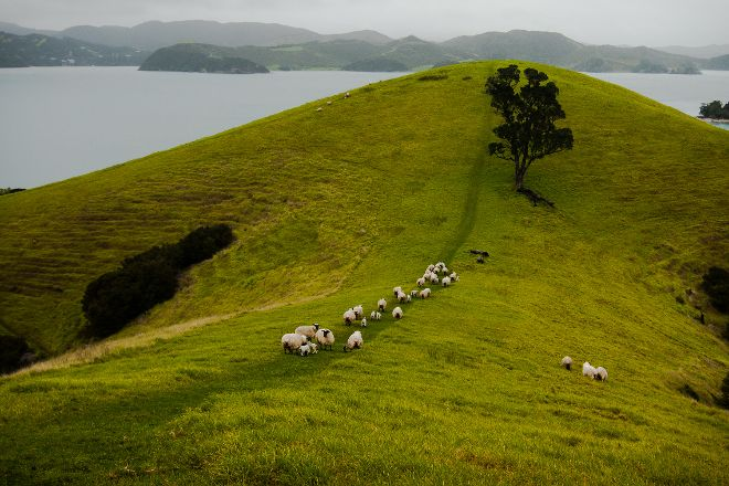 Urupukapuka Island, Paihia, New Zealand