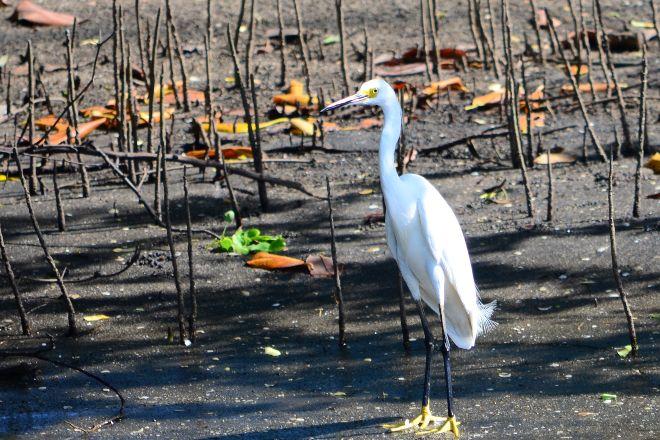 Juan Venado Island Nature Reserve, Las Penitas, Nicaragua