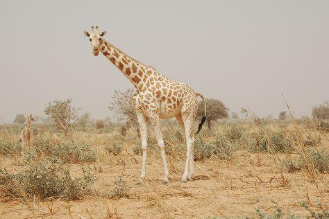 Koure Reserve, Koure, Niger