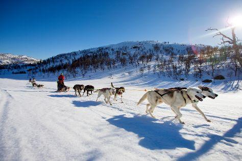 Haukeli Husky, Rauland, Norway