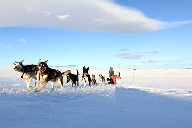Geilo Husky Day Tours, Geilo, Norway