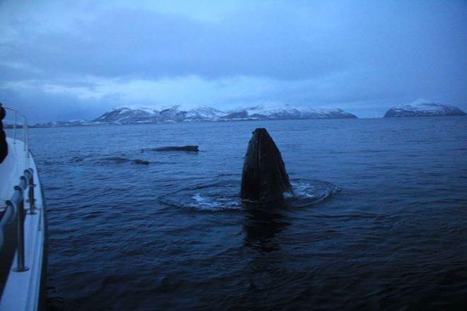 Lady Elsie Tromso - Sea fishing & Whale watching, Tromso, Norway