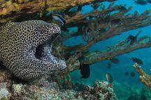 Omanta Scuba Diving Academy