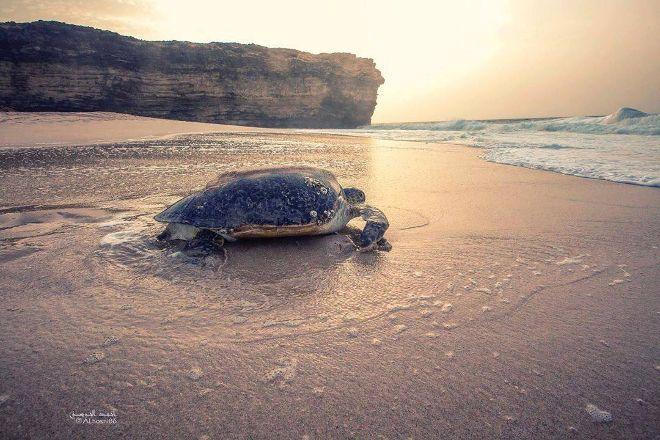 Ras Al Jinz Turtle Reserve, Sur, Oman