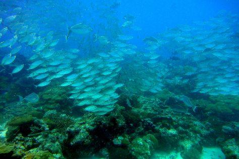 German Channel, Koror Island, Palau