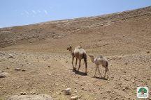 Masar Ibrahim Al Khalil (Abraham Path), Beit Sahour, Palestinian Territories