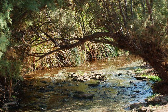 Enot Tsukim Nature Reserve - Ein Feshkha, Dead Sea Region, Palestinian Territories