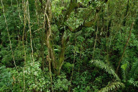 Panama Rainforest Discovery Center, Gamboa, Panama